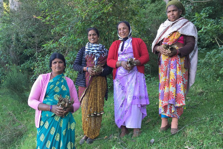 Eukalyptus – Neues Bio-Anbauprojekt Indien; Frauengruppe