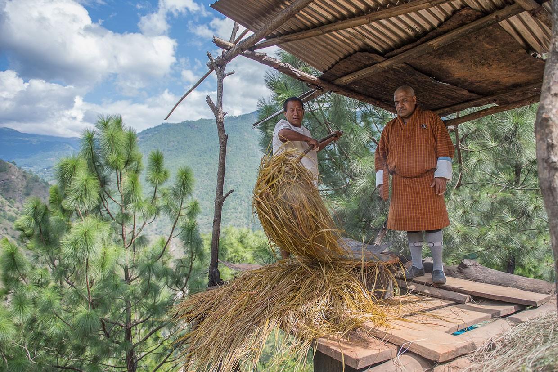 Lemongrass – Bio-Anbauprojekt Bhutan