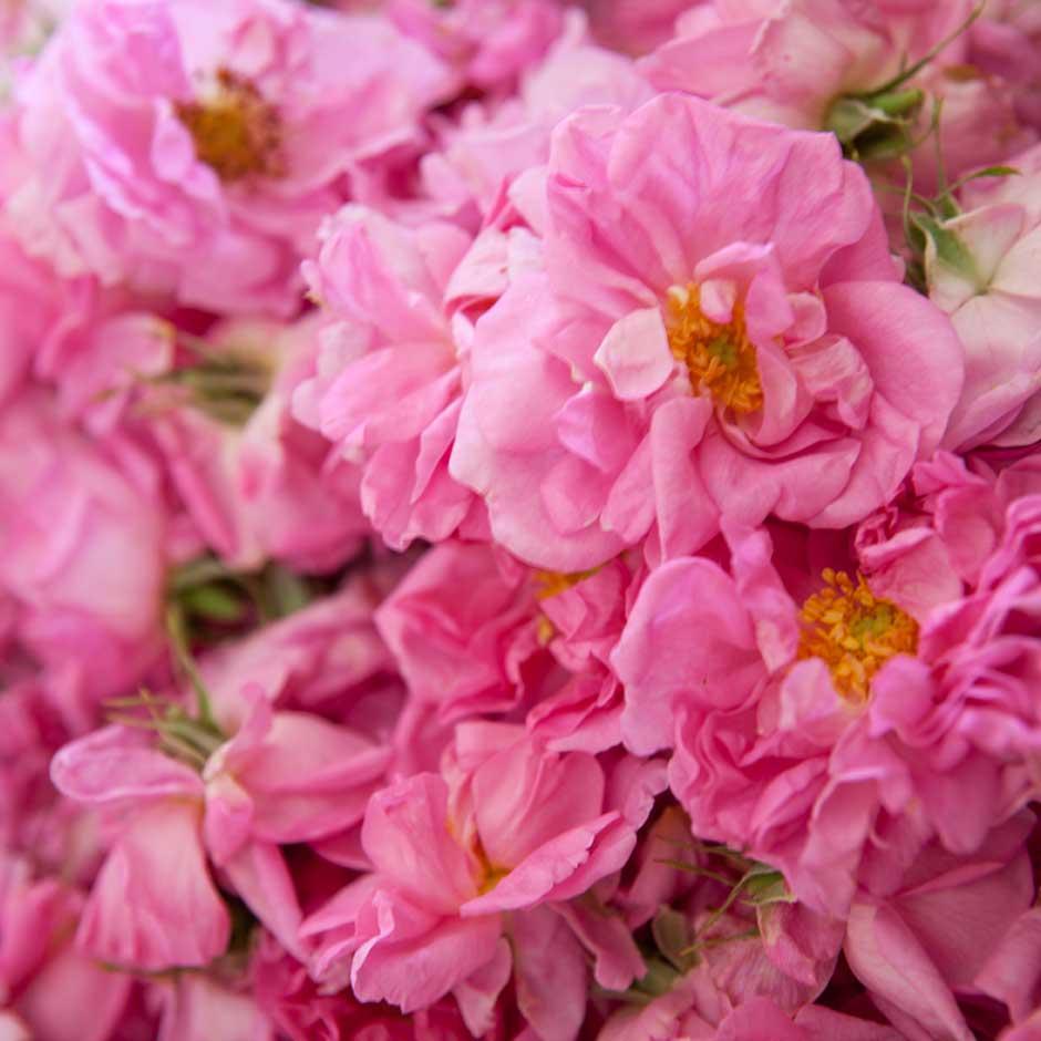 Ätherisches Rosenöl enthält bis zu 400 natürliche Inhaltsstoffe.
